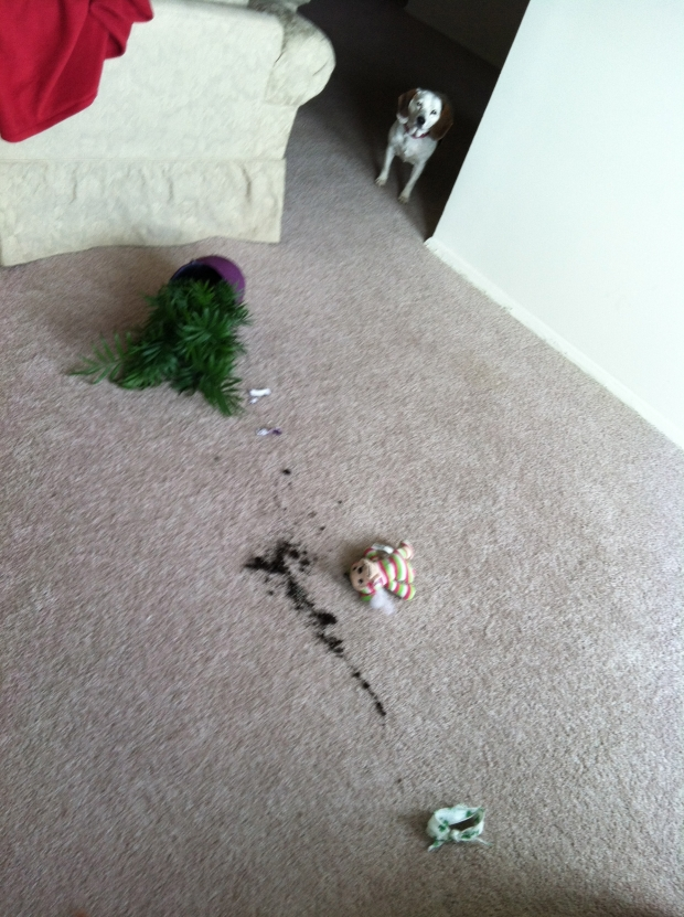 Izzy had a little bit too much fun with the plant