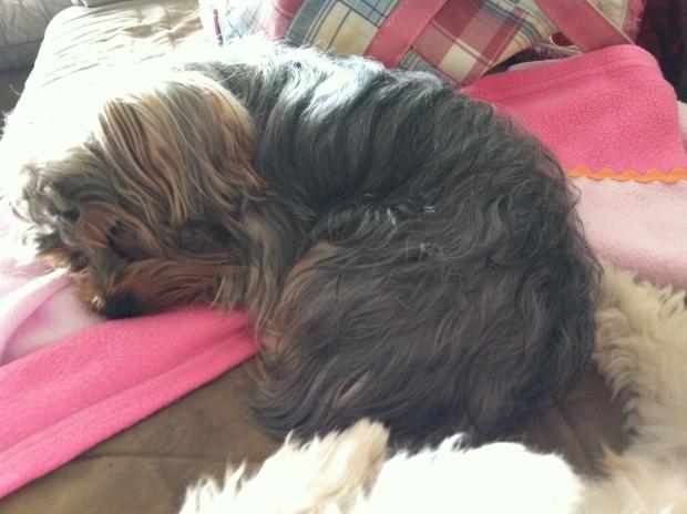 Sleepy Sparkle