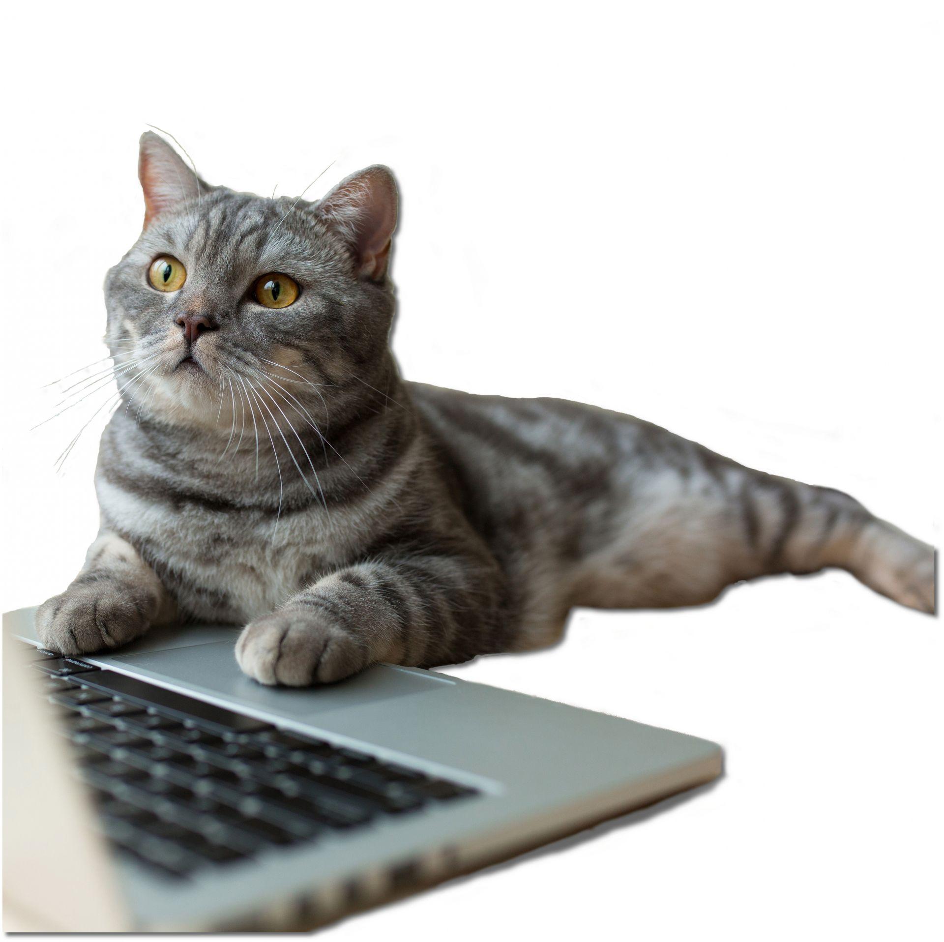 Cat sending email