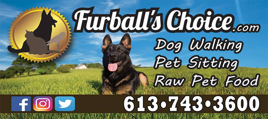 Furball's Choice