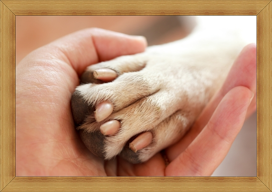 Human hand shaking hands with a dog's paw