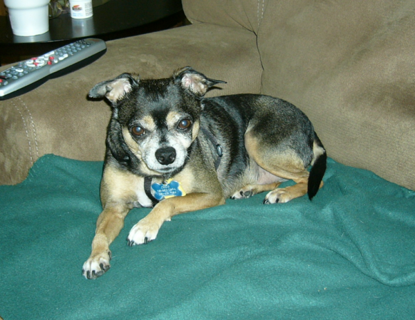 Chico is friendly as they come and would very much like to hang out with everyone in the world.