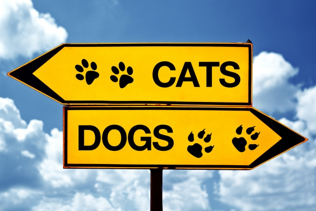 Cat and Dog sign each pointing a different direction