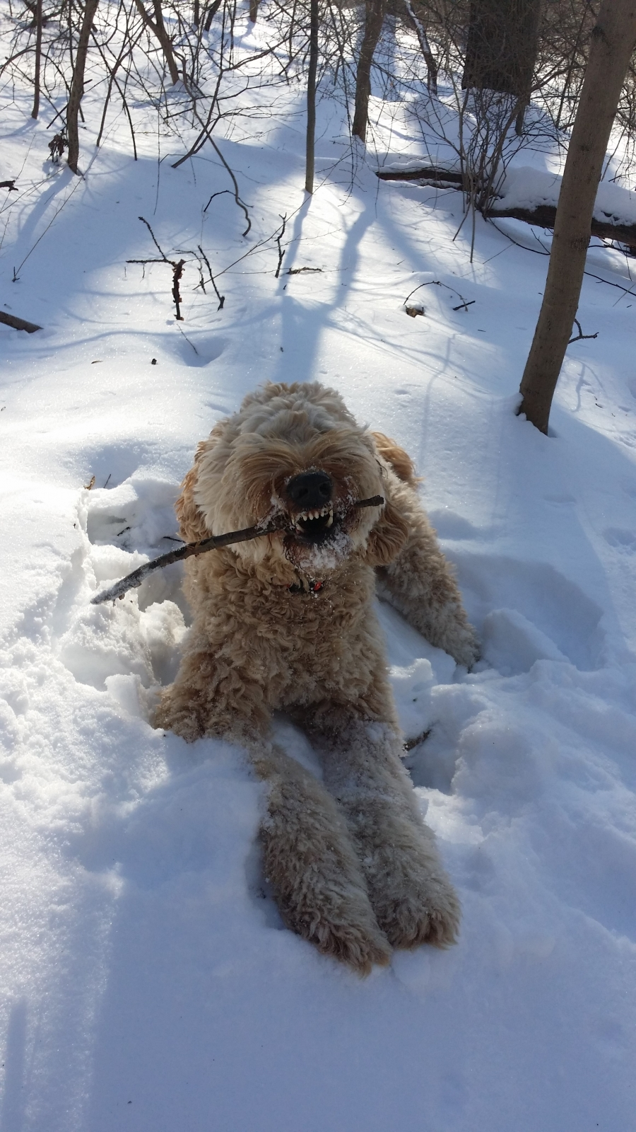 """Rawr, I love this stick"""