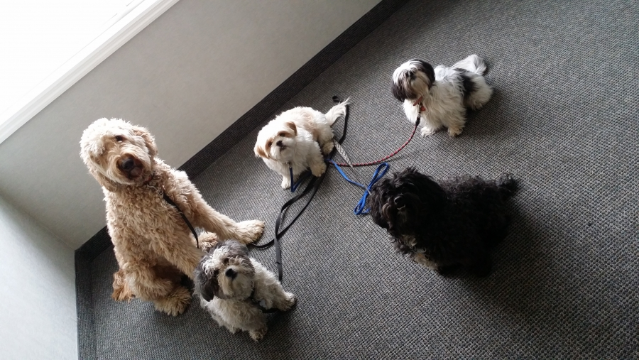 Doggy Play Group