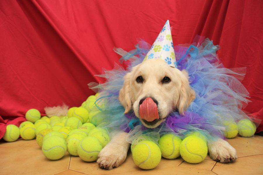 Lilly's Birthday!