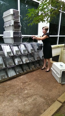Robin Byrd and some of the many humane traps used by LNLCP.