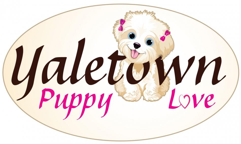 Yaletown Puppy Love