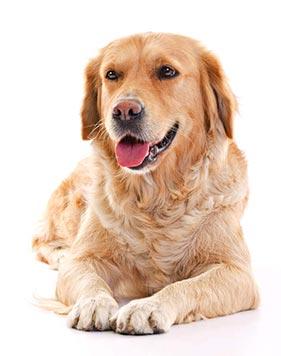 imagem de cachorro