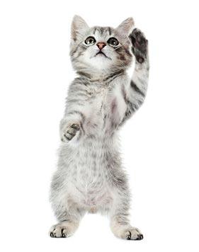 imagem de um gato