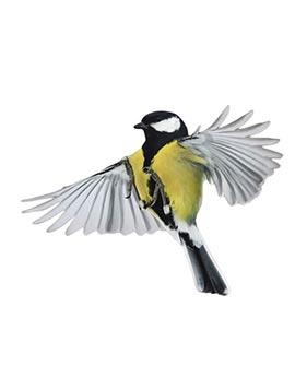 imagem de um papagaio