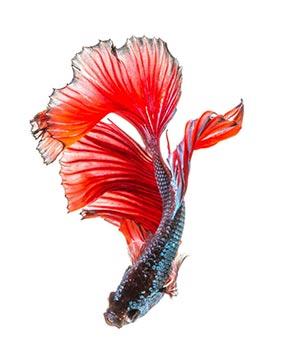 imagem de peixes
