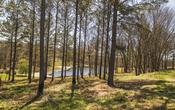 001 117 pine log rd