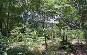 4300 meadowcrest dr 7.19.17 15