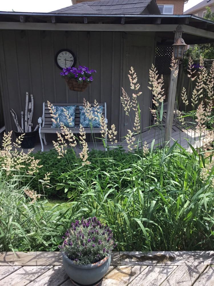 35 lavender pot