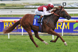 All Eyes On Sepoy On His Way To Golden Slipper