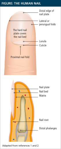 Drug-Induced Nail Changes: Counting to 10