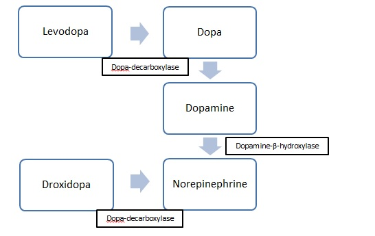 Droxidopa: Managing Neurogenic Hypotension