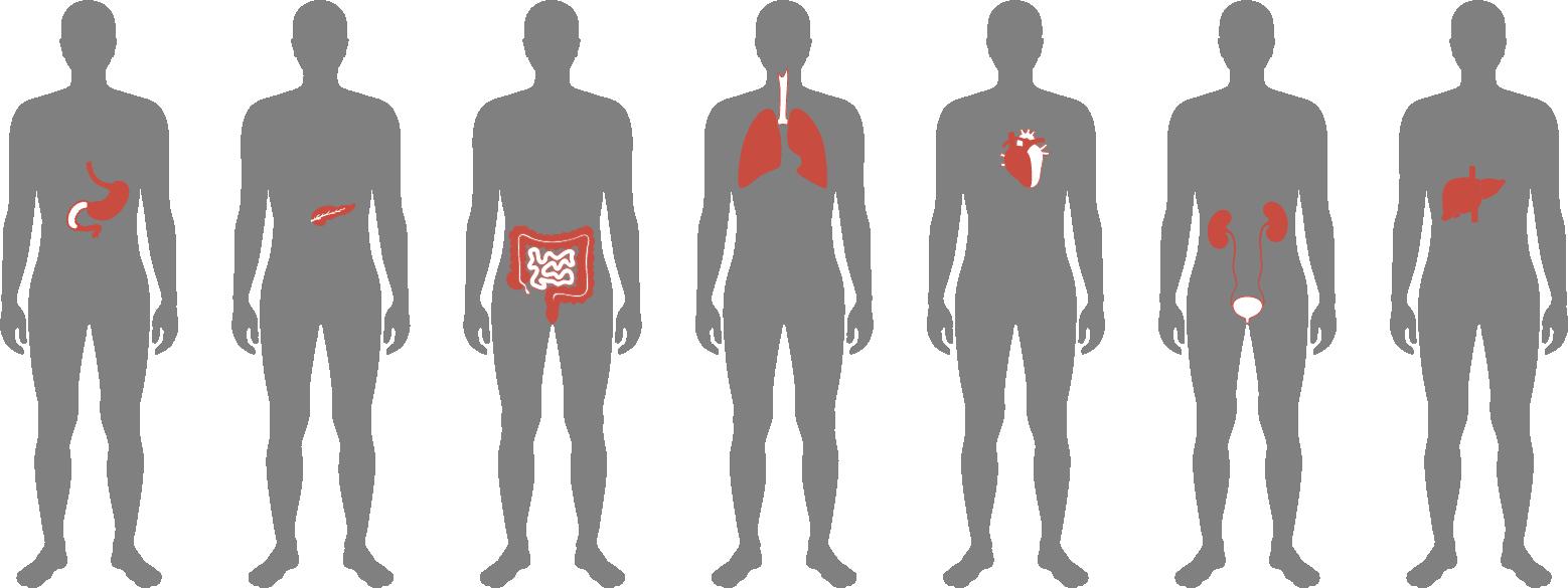 The Myths and Miracles of Organ Donation
