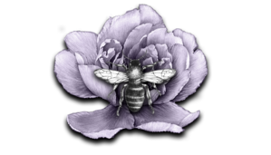 Honey Bee Cleaning Services LLC primary image