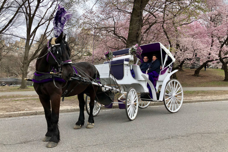 Central Park Carriage Rides image