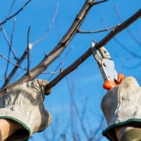 Urban Forestry Tree Service image
