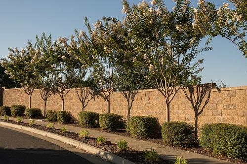 Tree Removal Arborist primary image