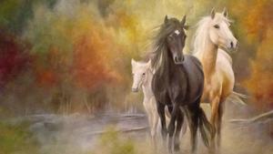 Arizona Wild Horse and Burro image
