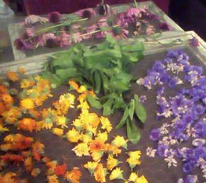 Helpful Herbals primary image
