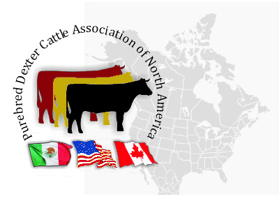 Purebred Dexter Cattle Association of North America image