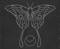 Moth & Moon Co. image