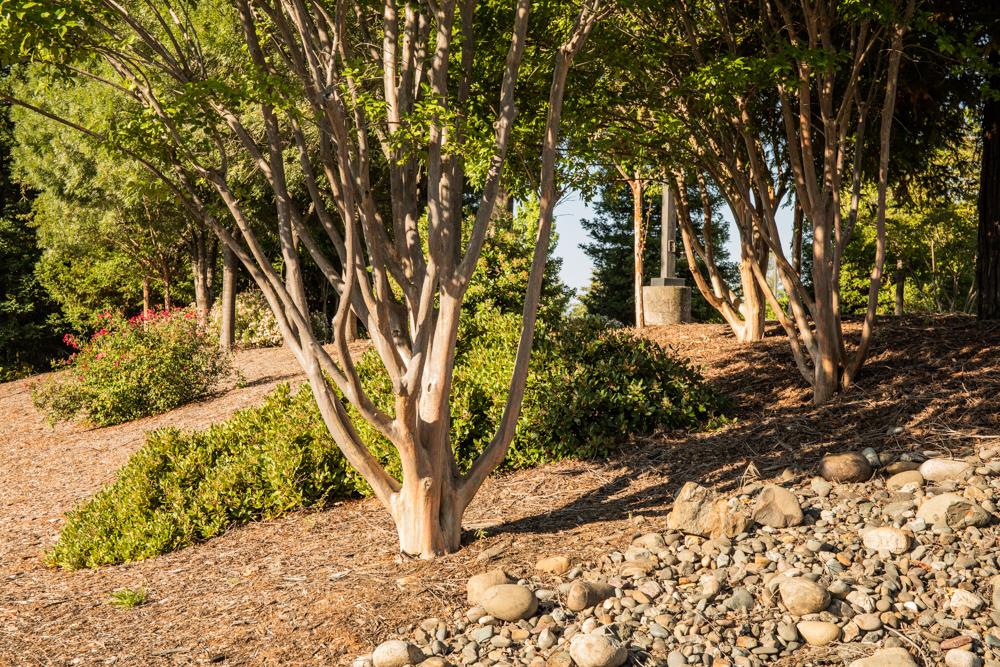 Tree Removal Arborist image
