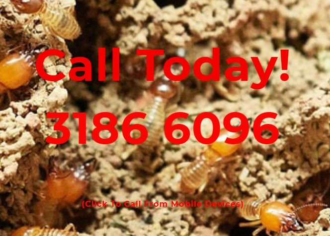 Termite and Pest Control North Brisbane image