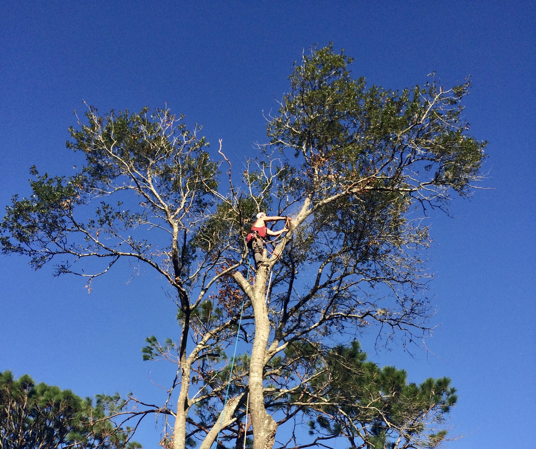 Top Notch Tree Service image
