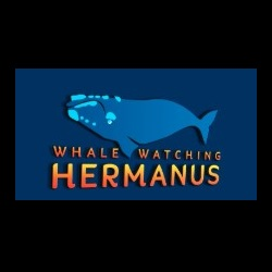 WHALE WATCHING HERMANUS primary image