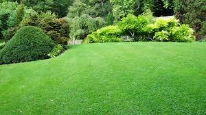 Gabis Lawn Mowing image