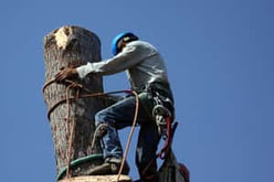 Tree Removal Lancaster image