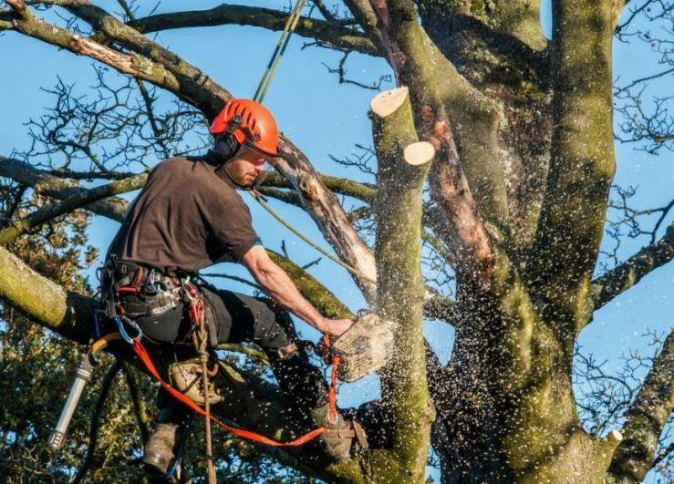 Bedford Tree Service Company image