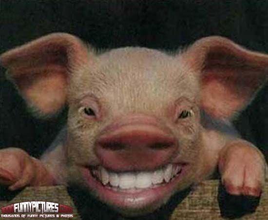 Smiling hog bbq image