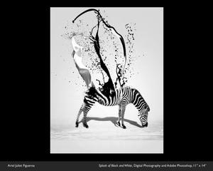 Ariel Juliet Design image