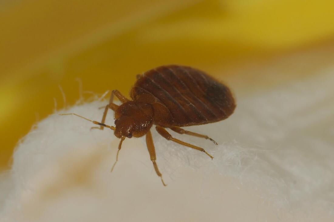 Springfield Pest Control image