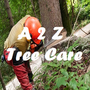A to Z Tree Care image