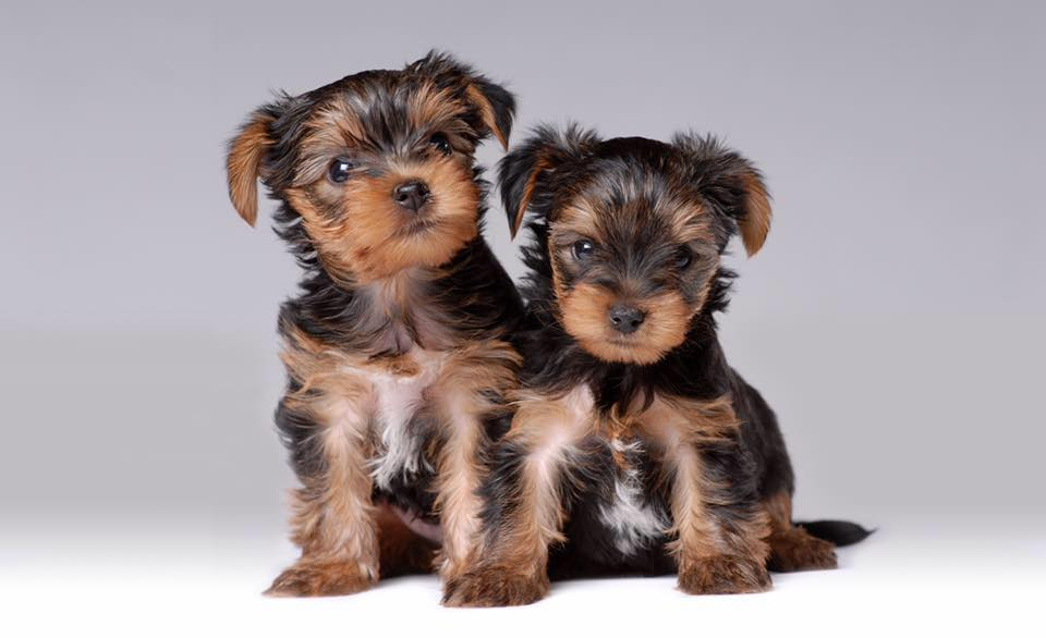 Central Park Puppies image