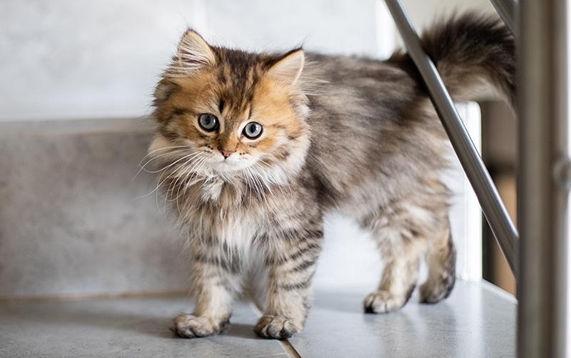 DownDog Veterinary Clinic image