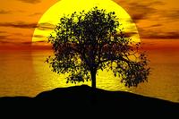 Radiant Tree Wellness image