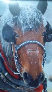 Horse Drawn Maple Enterprises primary image