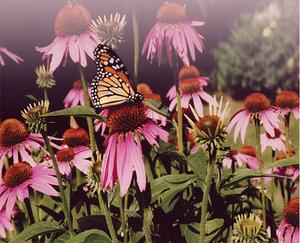 Lily's Garden Herbals, LLC primary image