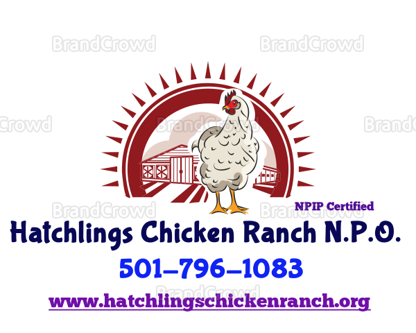 Hatchlings Chicken Ranch image