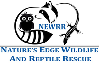 Nature's Edge Wildlife and Reptile Rescue image
