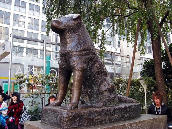 Hachiko: The True Story of a Loyal Dog by Pamela S  Turner